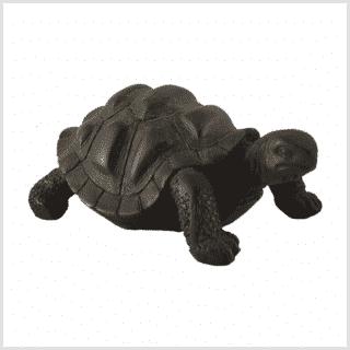 Schildkröte Schwarz Seitenansicht