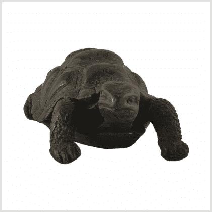 Schildkröte Schwarz Vorderansicht